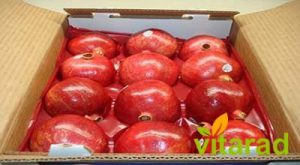 Export pomegranate from Iran