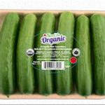 Organic cucumber for sale