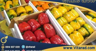 Persian bell peppers for sale
