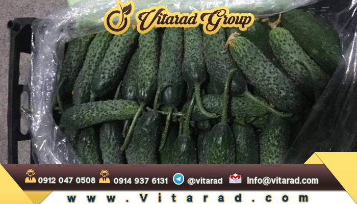 Export packing of cucumber
