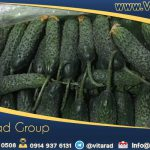 Wholesale prices of cucumbers