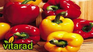 Export bell pepper