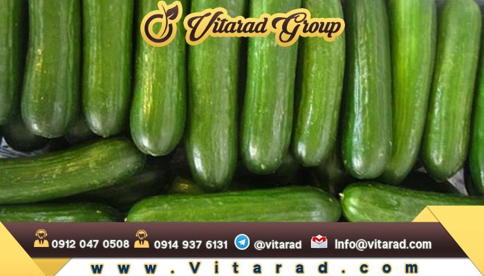 Preparing cucumbers for export from Iran