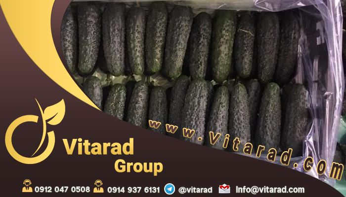 Vitarad Trading Special site for buying and selling cucumbers